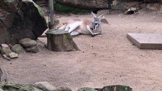 大人も十分楽しめる動物園
