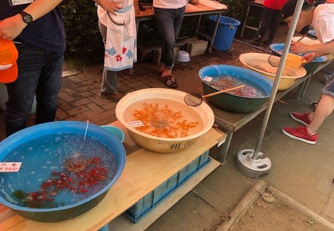江戸川区金魚まつり