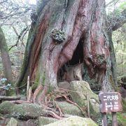 二代大杉は見応え充分でした。