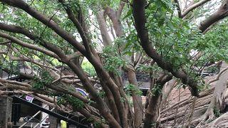建物が木に侵食されている