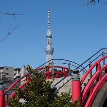 太鼓橋(男橋)とスカイツリーのコラボ