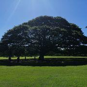 ものすごい大きな木でした