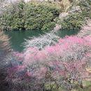 月ヶ瀬梅渓 梅まつり