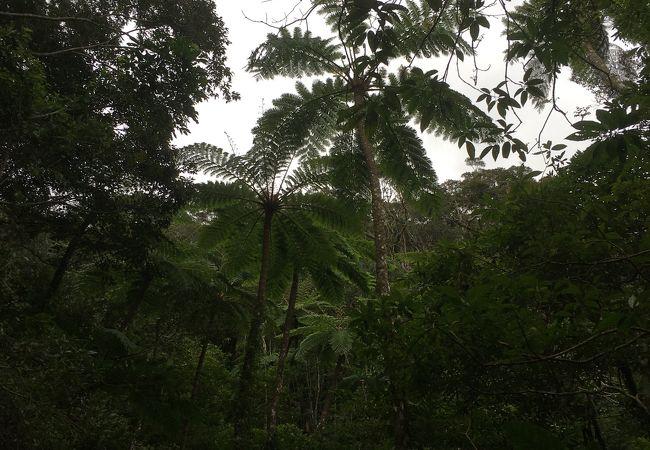 ツアーでジャングル散策♫