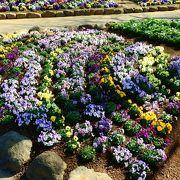 花見で有名な公園