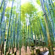 報国寺=竹のお寺ですね