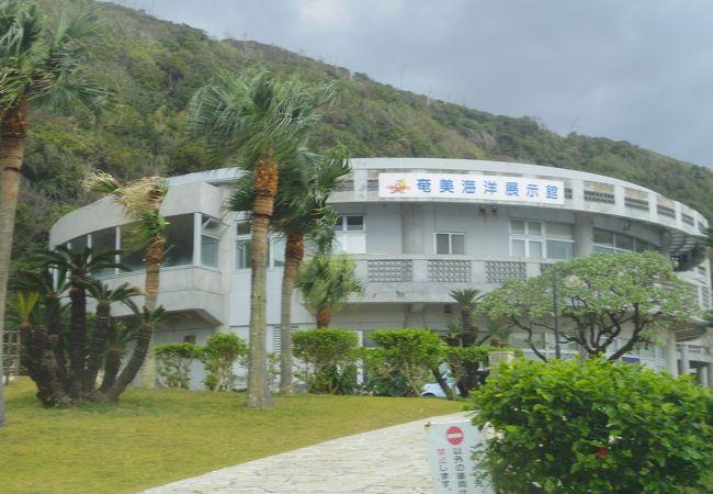 海亀多い奄美海洋展示館