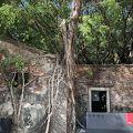 台湾のタ・プローム(カンボジアの遺跡)