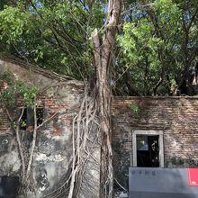 安平樹屋の入口