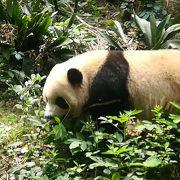 とにかくパンダがかわいい