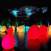 ガーデン・ラプソディは、幻想的な夜を演出