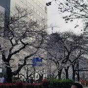 街中のきれいな桜並木