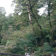 手軽に屋久島の自然を体験できる