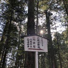 日光杉並木