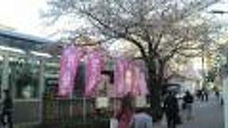 染井よしの桜祭り