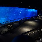 東南アジアを代表する水族館