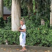 ブキッサリ寺院のお猿