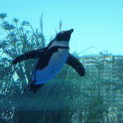 都心で存分にペンギンを愛でられる水族館