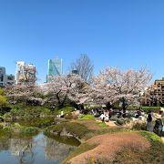 美しい桜も人は少なめ