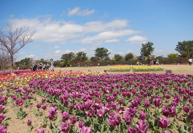 静岡県営 吉田公園