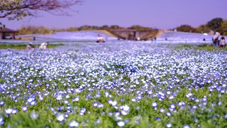 海の中道海浜公園 花のエリア