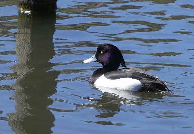 渡り鳥もやってくる人工池