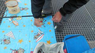 桟橋の3月 イワシが釣れています