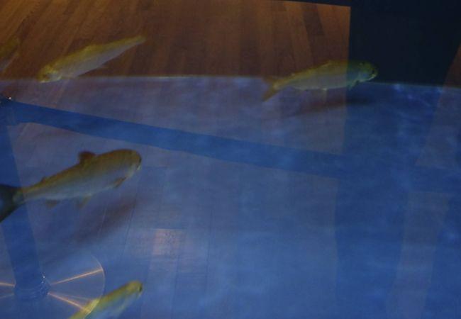 故郷・田沢湖迄あと一歩!、クニマスと田沢湖の成員、歴史を知ることが出来ます。