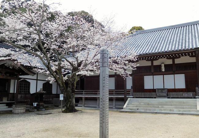桜が咲いているかなと思い見に行ってみました。