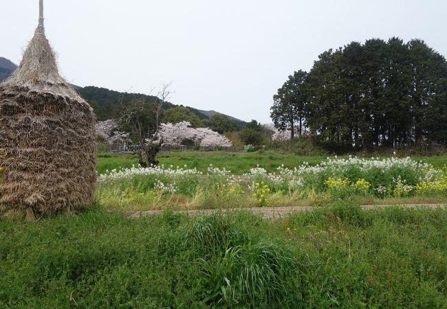 九品寺庭園