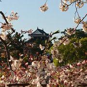 コロナでも縮小して、桜まつりはやってます
