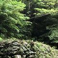 写真:八重岳野戦病院跡