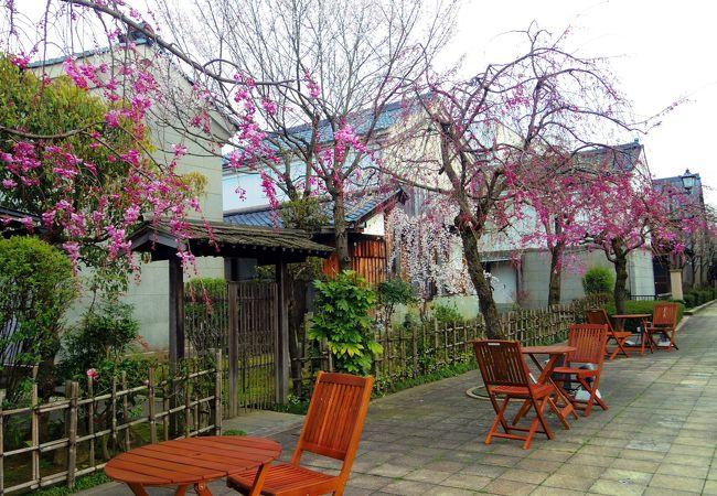 桜咲く蔵の辻