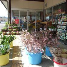 店頭には野菜の種や鉢植えの苗や花々がいっぱい