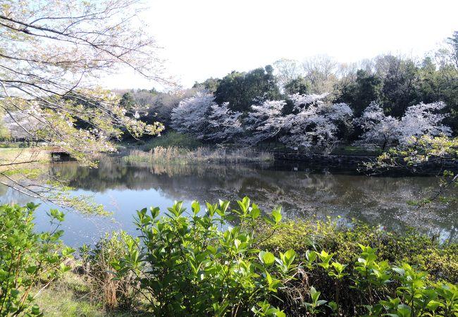 桜の季節はオススメ!