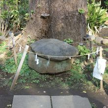 江島神社 奥津宮 亀石