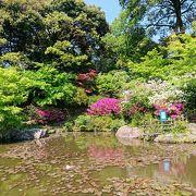 つつじが綺麗な日本庭園