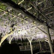 藤がとても立派でした、夜はライトアップもしていて、東京スカイツリーの紫色ととてもよいコントラストでした。