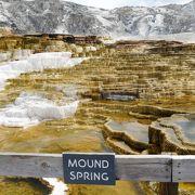 マンモスホットスプリングスでは石灰岩でできた段々畑や、湯気が出ている温泉を見ることができました。