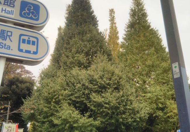 いちょう並木が美しい季節に