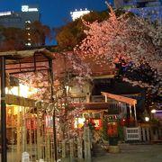 露天神社の夜桜