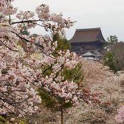 日本の春を堪能