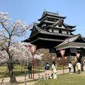 桜満開の松江城