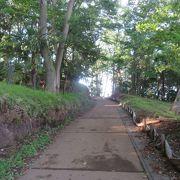 森林の中の遊歩道を歩きました