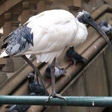 …入口の階段辺りにクロトキらしい鳥の姿もありました。