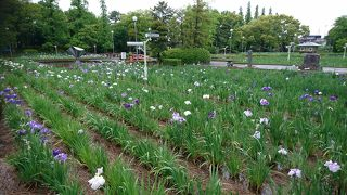油ケ渕遊園地