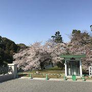 初めて行った皇居二重橋、桜が見頃