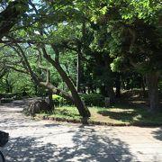 吉宗が造った桜の名所