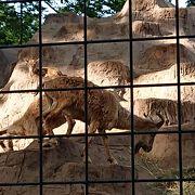 川崎の無料動物園