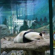 パンダが近くで見れた。